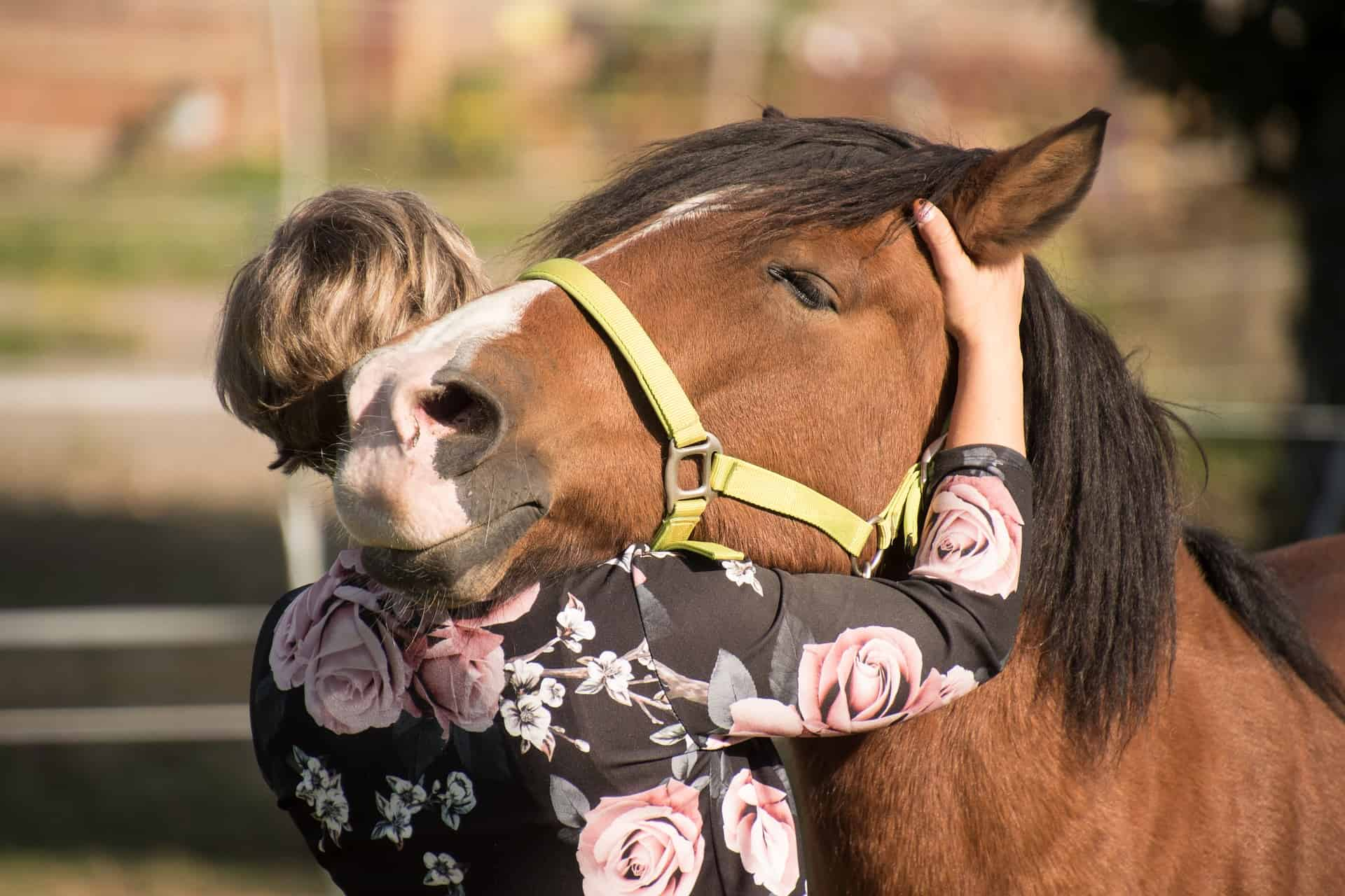 The Best Noseband: Shopping Guide and Recommendations (09/21)