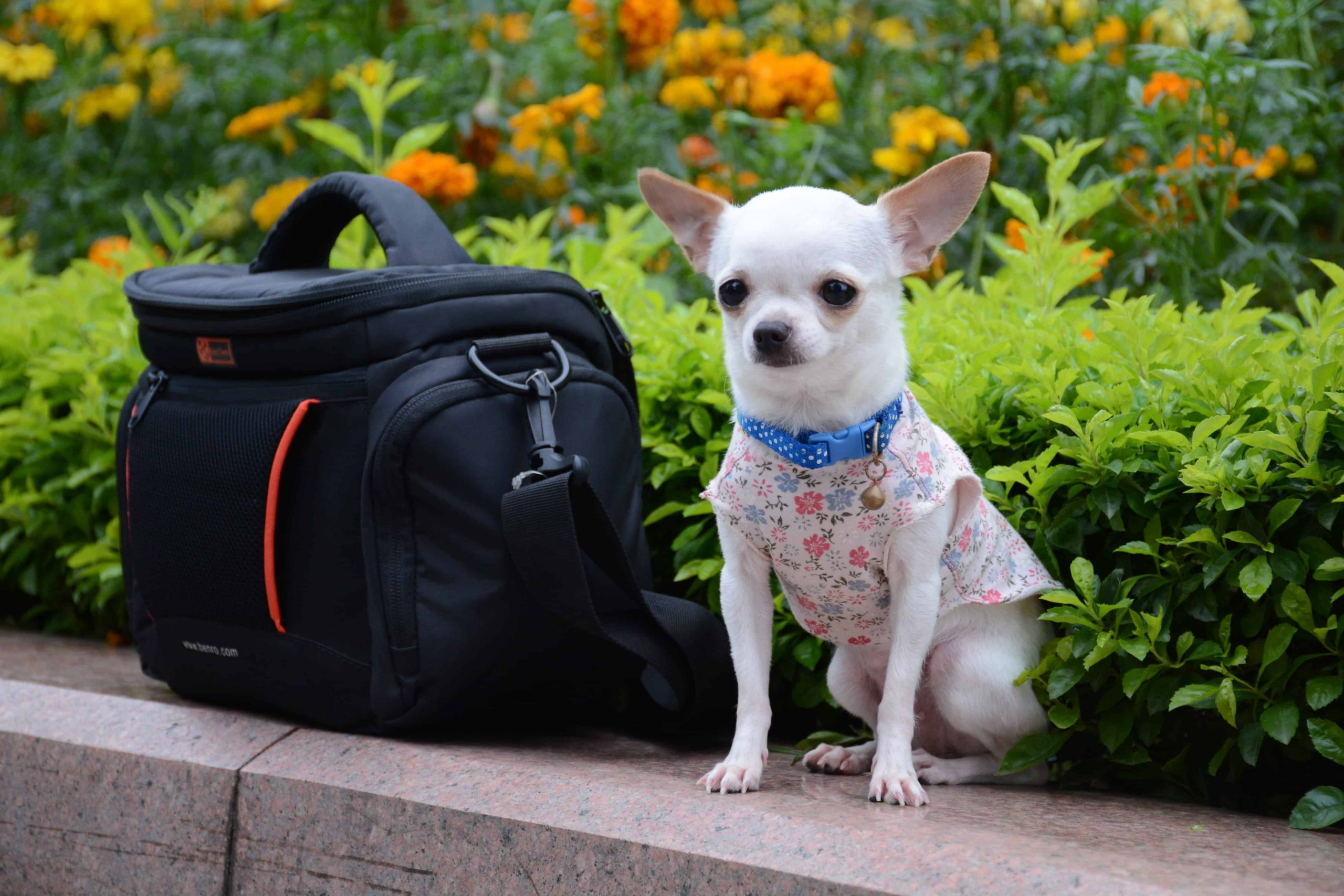 The Best Dog Bag: Shopping Guide and Recommendations (09/21)