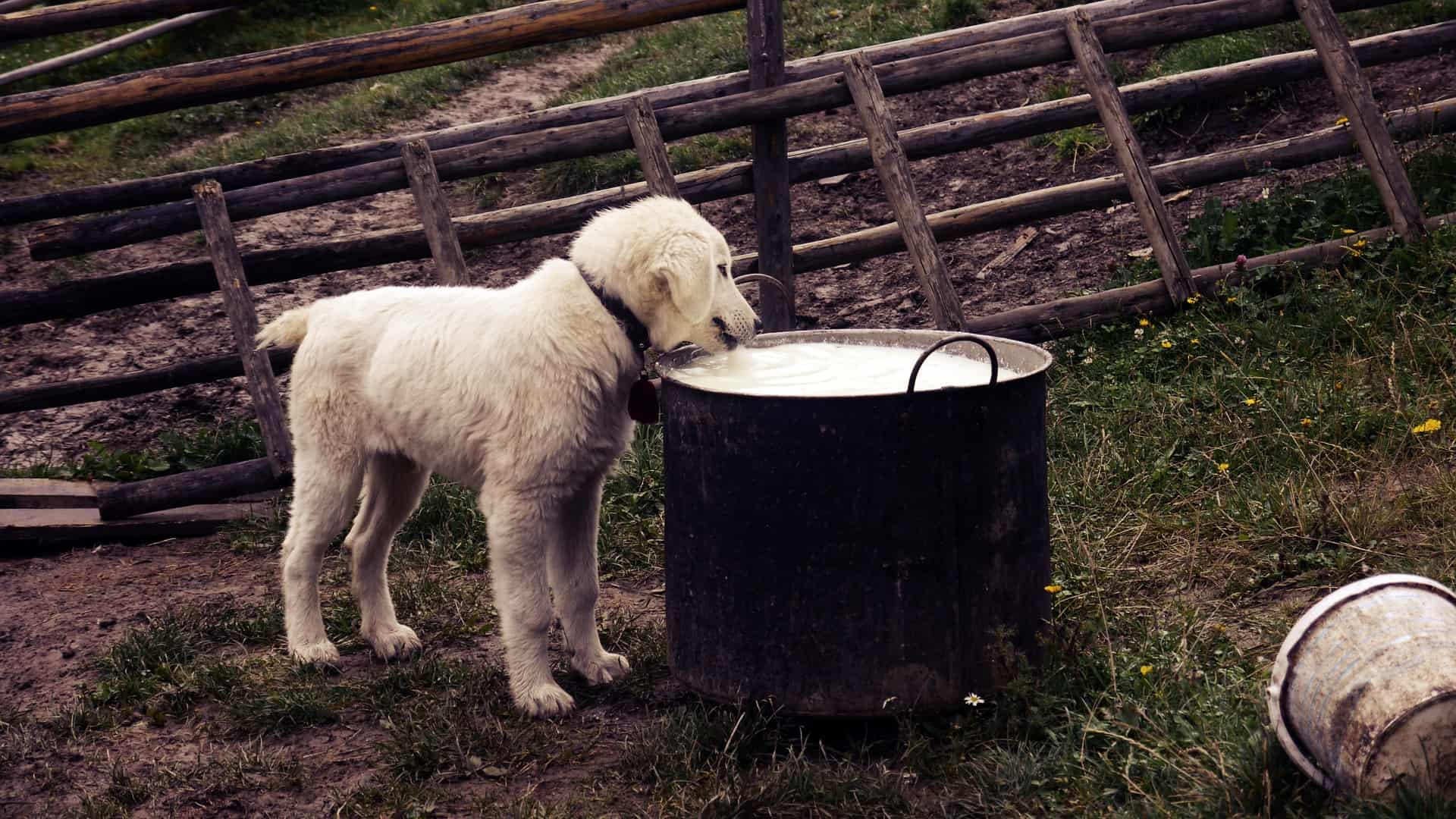 The Best Puppy Milk: Shopping Guide and Recommendations (09/21)