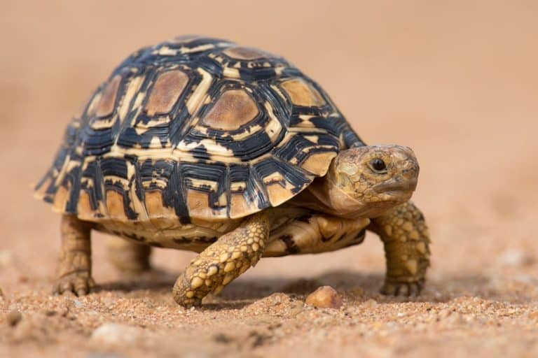 Turtles need a specific food