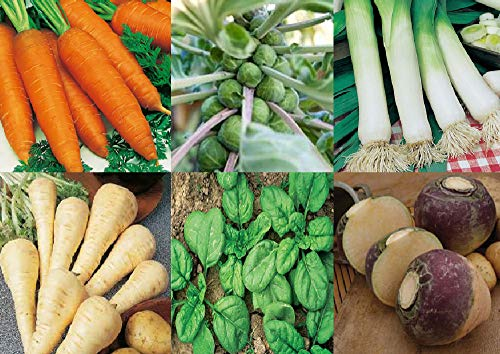 Viridis Hortus - 6 Pack Winter Vegetable Seed Collection - Carrot, Brussels Sprout, Leek, Parsnip, Spinach & Swede